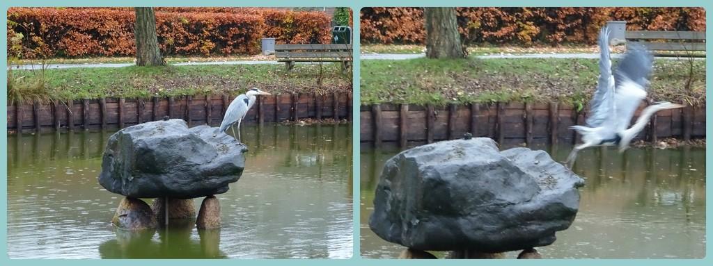 heron by gijsje