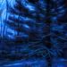 ETSOOI - Pine Tree at Dusk