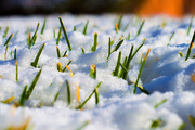 1st Dec 2018 - Snow_Grass