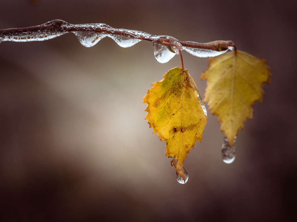 A frosty morning by haskar