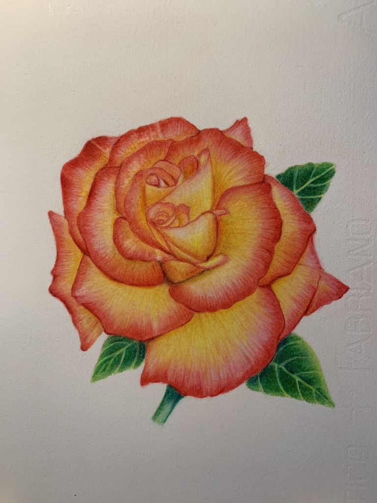 Double headed rose by pesus