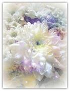 3rd Dec 2018 - A bouquet of white flowers