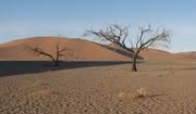 19th Nov 2018 - Desert Trees