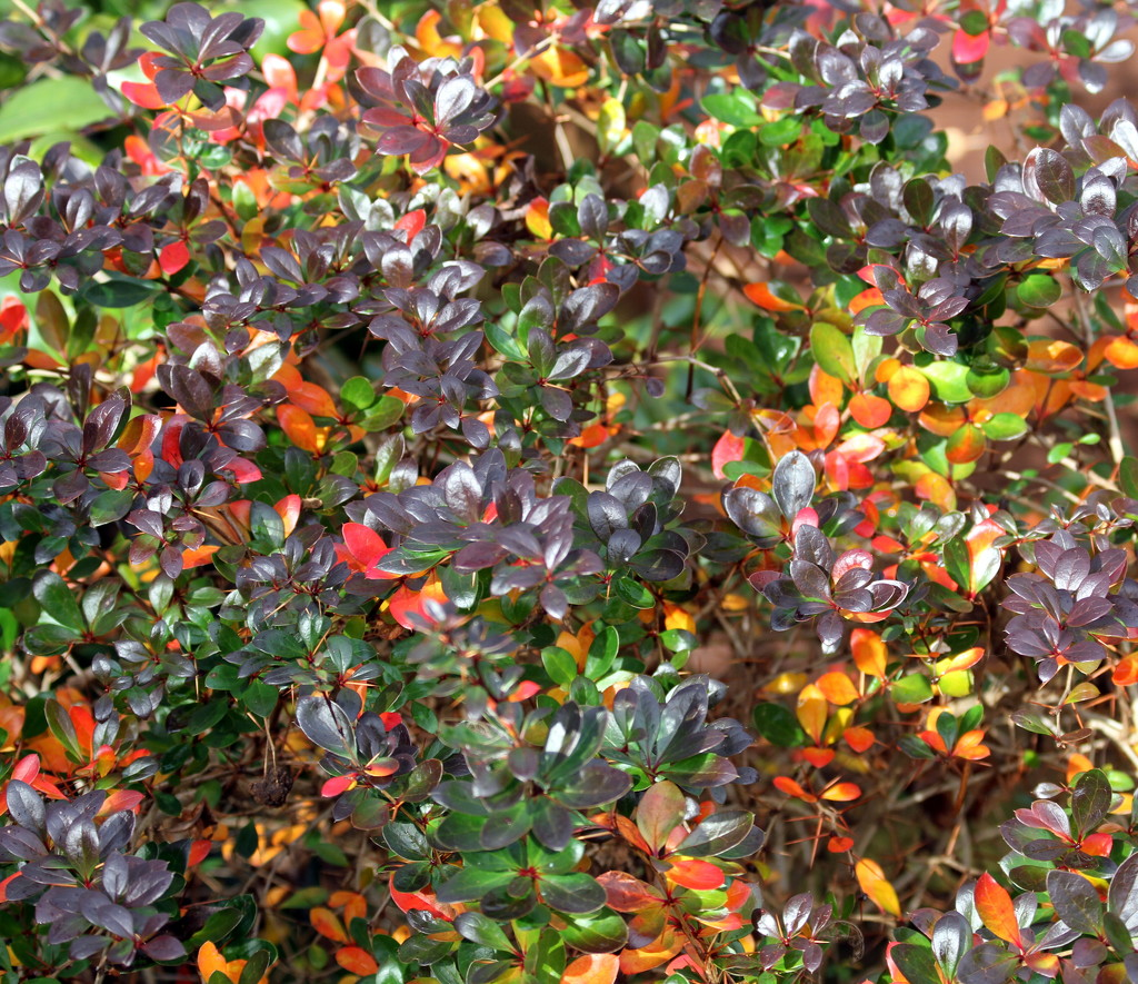 Autumn Leaves by bagpuss