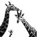 A Trio of Curious Giraffes by taffy