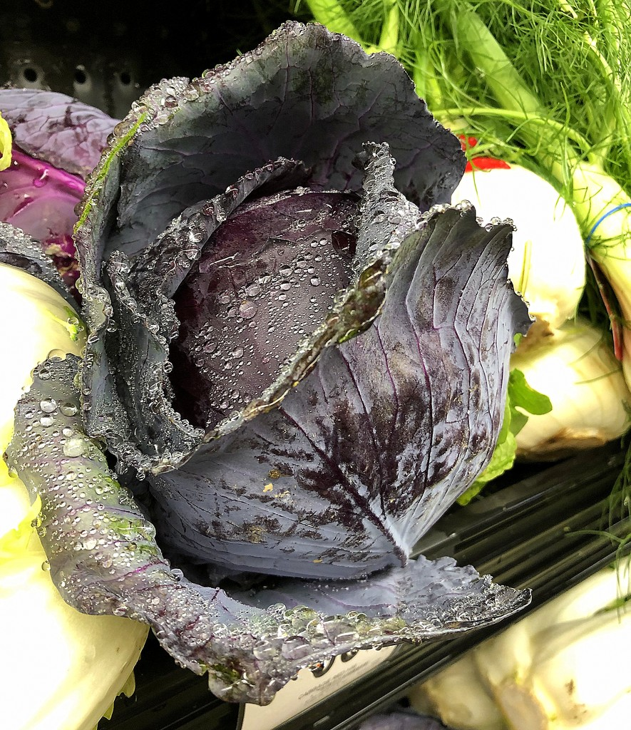 Red cabbage by homeschoolmom