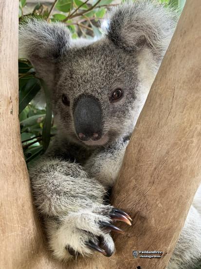 Krissy by koalagardens