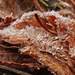 Ice Crystals and Fall Leaves