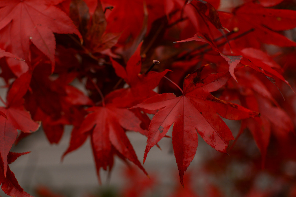 Red... by thewatersphotos