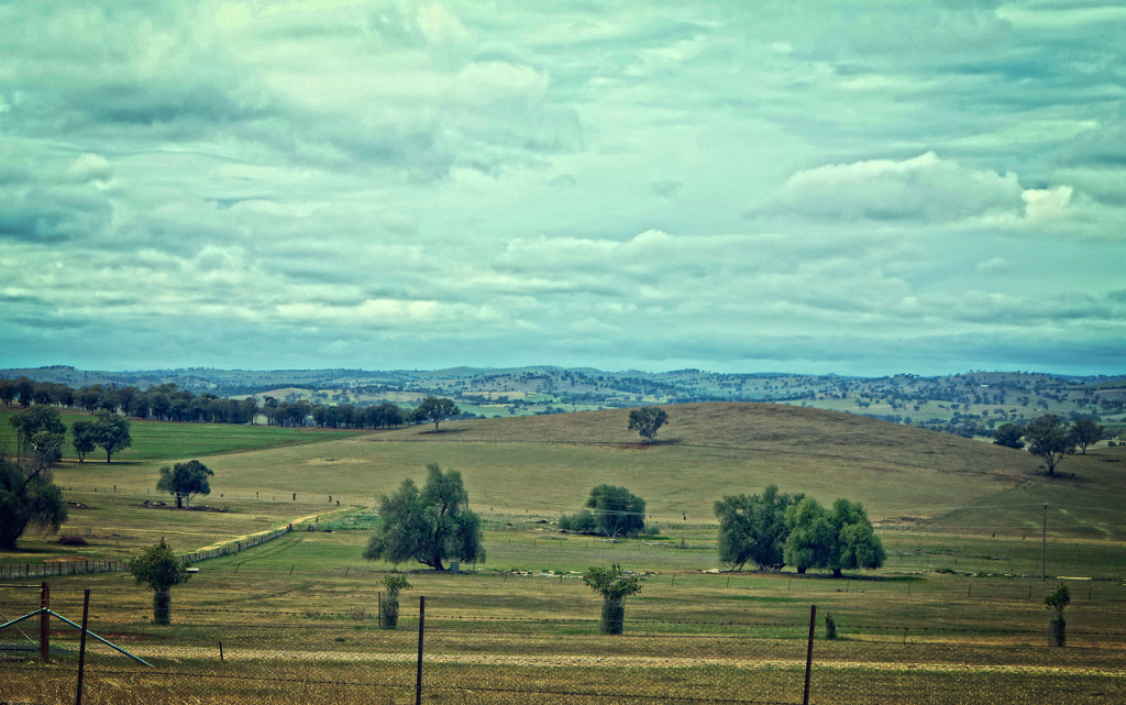 Cowra-2 by annied