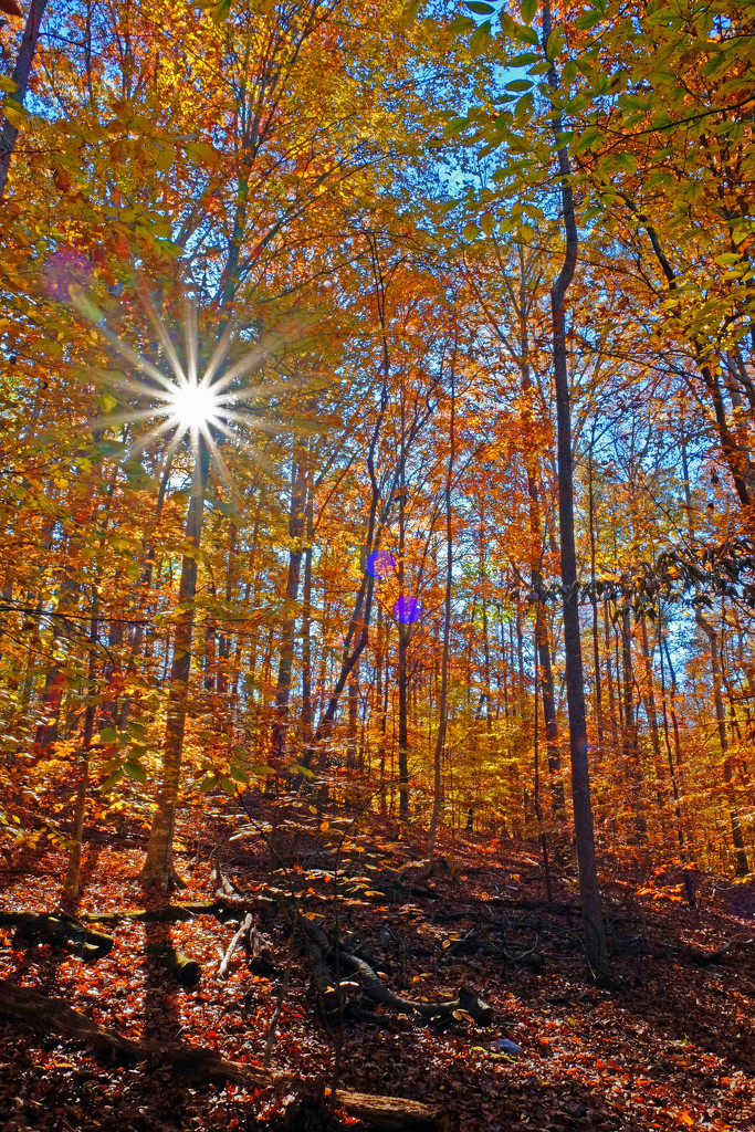 Fall Forest Flare by soboy5