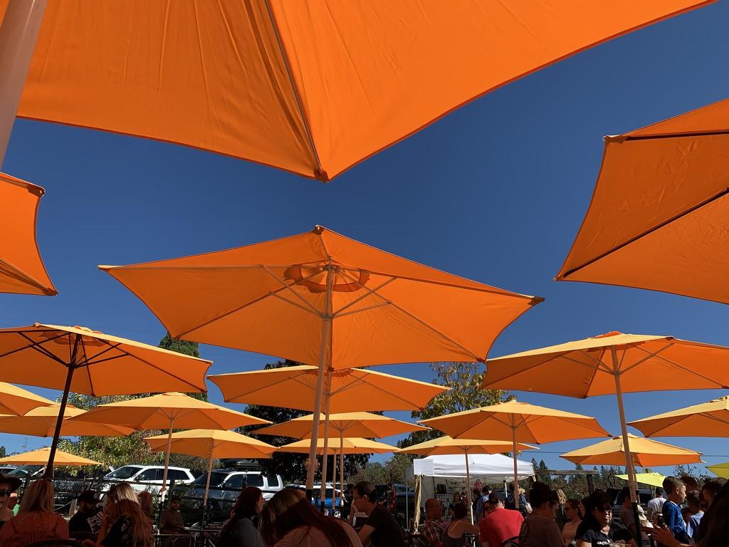 Umbrellas at the Micro Brew festival by shutterbug49