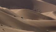 21st Nov 2018 - Dune sweep