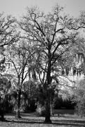 5th Dec 2018 - Trees