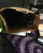 5th Dec 2018 - Cat In The Bag