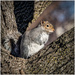 squirrel out my window by jernst1779