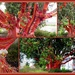 Knitted Pohutukawa.. New Zealand Christmas Tree..