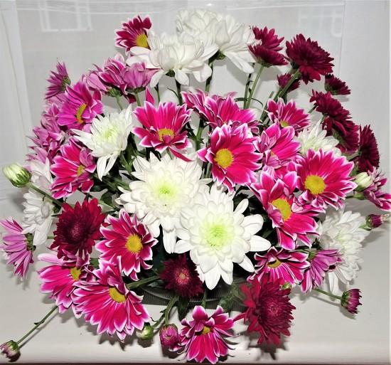Chryanthemums  by beryl