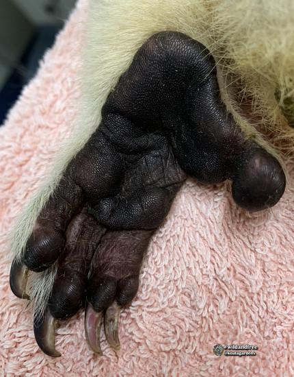 the koala foot by koalagardens