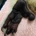 the koala foot