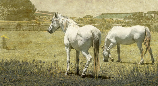 Some more Horses by ludwigsdiana