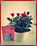 7th Dec 2018 - Miniature rose