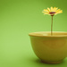 (Day 201) - Flower Bowl by cjphoto