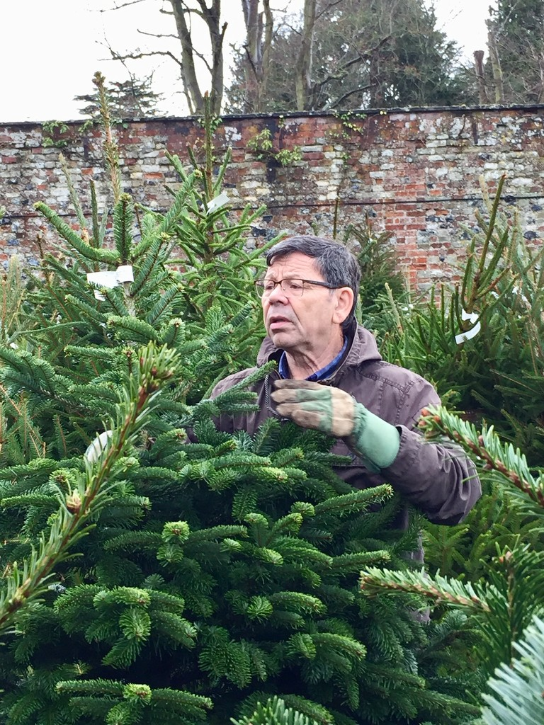 Searching For The Perfect Christmas Tree by gillian1912