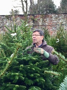 7th Dec 2018 - Searching For The Perfect Christmas Tree