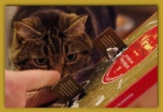 7th Dec 2018 - Look Who Wants An Advent Chocolate!