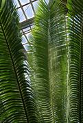 7th Dec 2018 - fern room ferns
