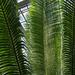 fern room ferns
