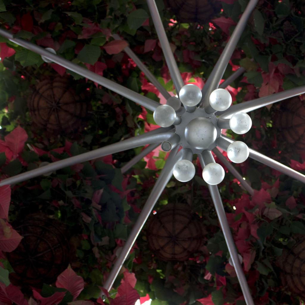 Sparkle and Poinsettias by lynbonn