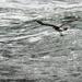 Seagull by yaorenliu