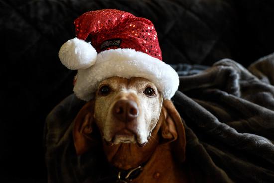 Santa Puppy by loweygrace