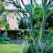 Our garden..