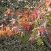 Autumn remnant.