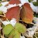 December 8: Strawberry Plants