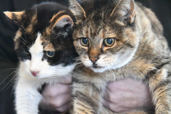 Two Very Old Cats by kareenking