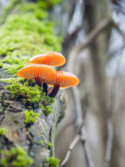 On a sloping tree by haskar