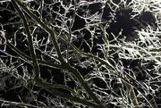 7th Dec 2018 - Branches