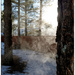 Cold Mist by joysabin