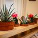 Cactus Rack