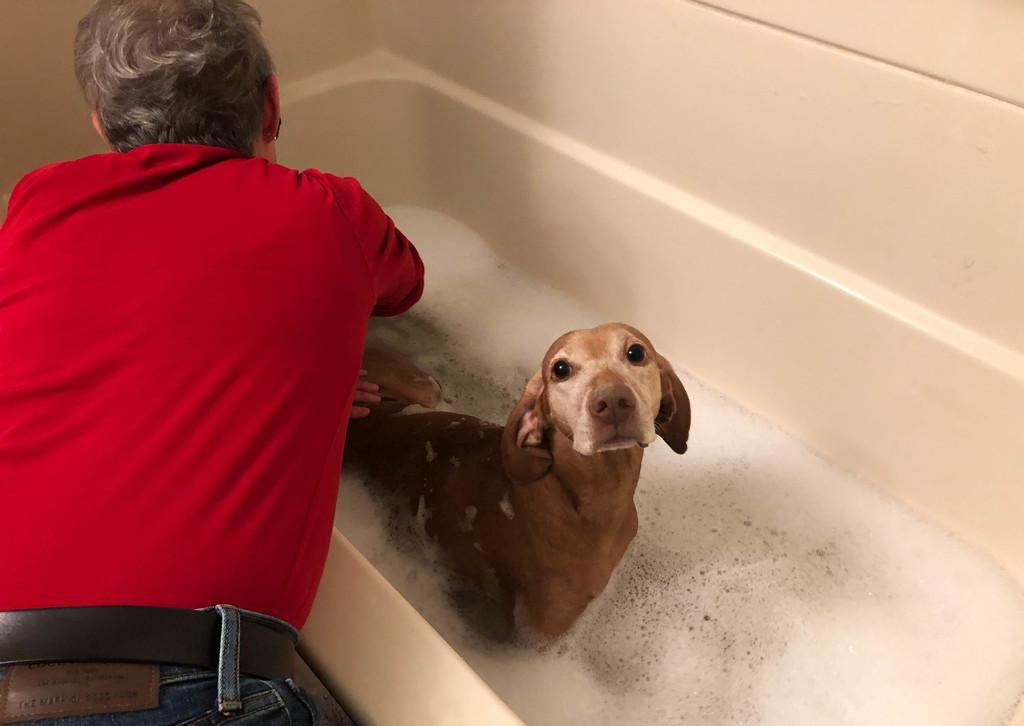 Holiday Bath by loweygrace