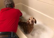 9th Dec 2018 - Holiday Bath