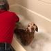 Holiday Bath