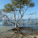 Mangroves by onewing