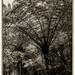 Tree Fern by yorkshirekiwi