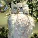 White Owl at Macy's
