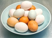10th Dec 2018 - Free Range Eggs